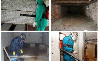 아파트에서 지하실 벼룩을 제거하는 방법