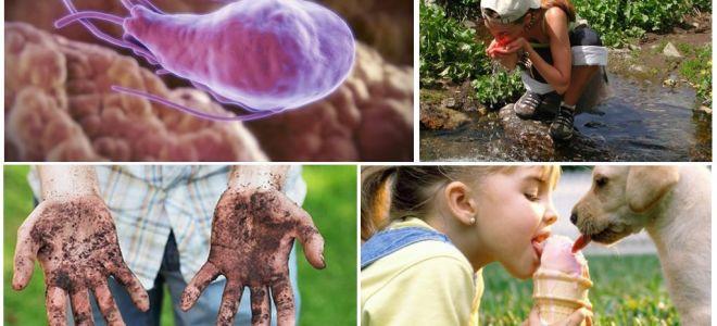 아이의 배설물에 Giardia 낭종 : 그들이 어떻게 보이고 어떻게 치료해야합니까?