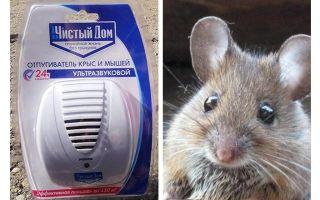 쥐 및 생쥐의 초음파 리 펠러