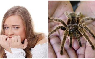거미에 대한 두려움의 이름 (공포증)과 치료 방법은 무엇입니까?