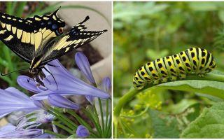 애벌레를 나비로 바꾸기