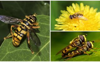 말벌은 말벌처럼 날다.