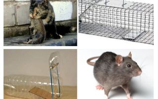 개인 주택에서 쥐를 얻는 방법