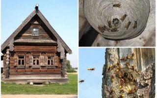 나무 집과 다른 곳에서 꿀벌을 내보내는 법