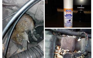 자동차 용 스프레이 쥐
