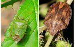 homebugs 또는 벌래가 냄새가 나는지 여부