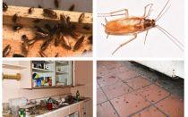 아파트에 바퀴벌레 없애기