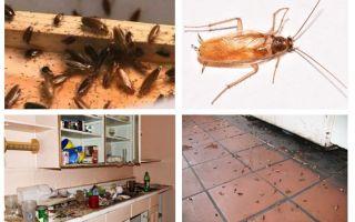 주방에서 바퀴벌레를 본 경우해야 할 일