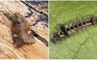 나비와 애벌레의 묘사와 사진은 싸우는 방법을 알 수있다.