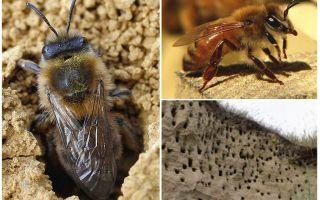사이트에서 꿀벌을 제거하는 방법