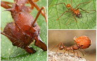 개미 자리