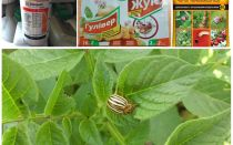 콜로라도 감자 딱정벌레에서 가장 효과적인 독과 독