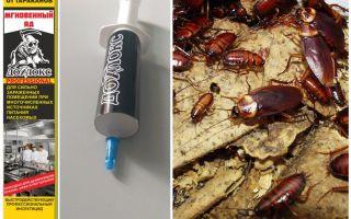 바퀴벌레로부터의 Dohloks
