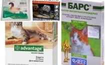 고양이와 고양이를위한 벼룩에서 시들기에 드랍