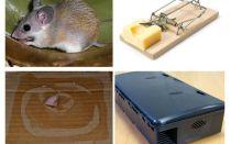 개인 주택에서 마우스를 제거하는 방법