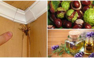 아파트 또는 개인 주택에 거미를위한 방법 및 도구