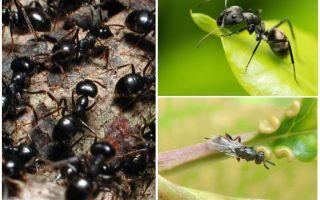 러시아와 세계에서 개미의 유형