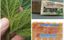 식물에 aphids에서 타르 및 가정용 비누