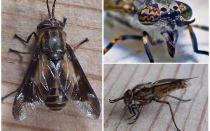 자세한 설명 및 사진 gadflies