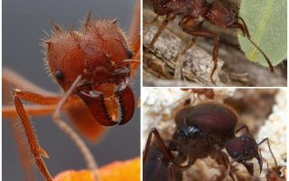 개미 잎 절단기