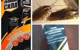구제 수단 바퀴벌레의 피해