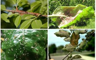 나무에서 진딧물을 없애는 법