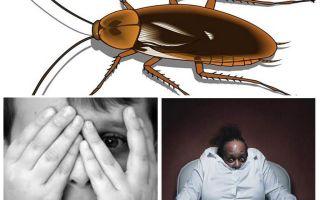 왜 사람들은 바퀴벌레를 두려워합니까?