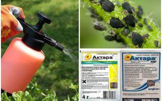 aphids에 대한 Aktara를 의미합니다.