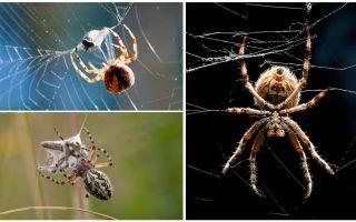 거미가 웹을 엮으면서