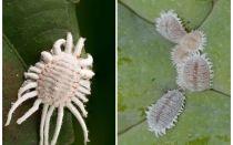 실내 식물에 박새를 제거하는 방법