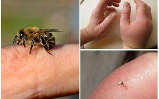 사람에게 유용한 꿀벌은 무엇입니까?