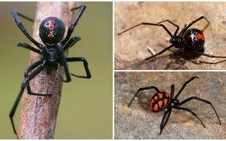 이름과 설명이있는 거미 사진의 종류