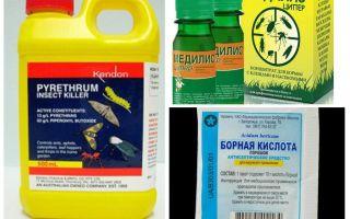 바퀴벌레에 대한 전문 치료