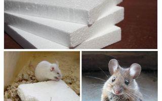 쥐들이 거품을 g아 먹습니까?