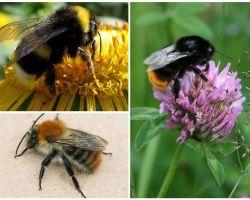 꿀벌은 어떻게 생겼지?
