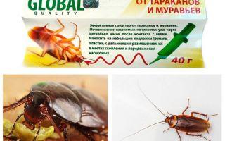 바퀴벌레 구제 글로벌 (글로벌)