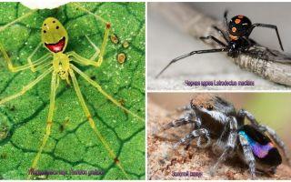 세계에서 가장 아름다운 거미