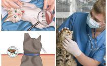 고양이 또는 고양이 집에서 벼룩을 제거하는 방법