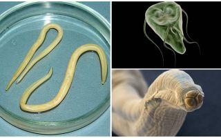 Giardia와 웜의 비교