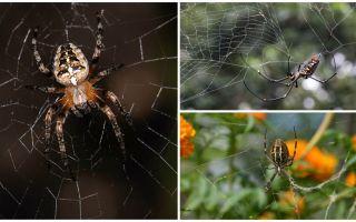 거미는 날아 다니는 법을 알고 있습니까?