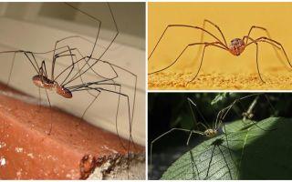 길고가는 다리가있는 거미 깍지