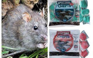 독살 쥐 죽음