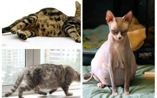 임신 한 고양이에서 벼룩을 제거하는 방법