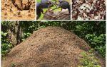 개미에서 개미의 삶