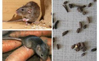 개인 주택에서 쥐를 다루는 방법