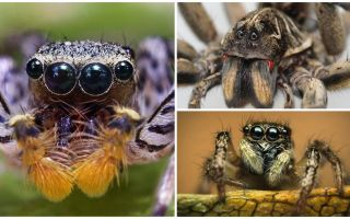 거미는 몇 안 되는가?