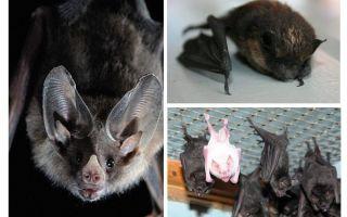집에서 박쥐를 제거하는 방법