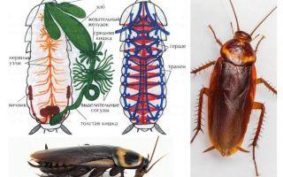 바퀴벌레 구조 - 외부 및 내부