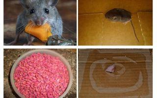 차고에서 마우스를 얻는 방법