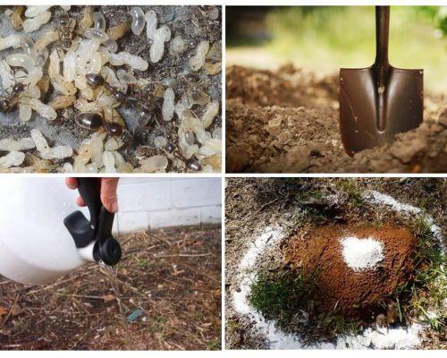 정원 민속 요법에서 개미를 구하는 법